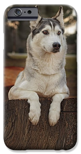 Recently Sold -  - Husky iPhone Cases - Aurora iPhone Case by Brian Cross