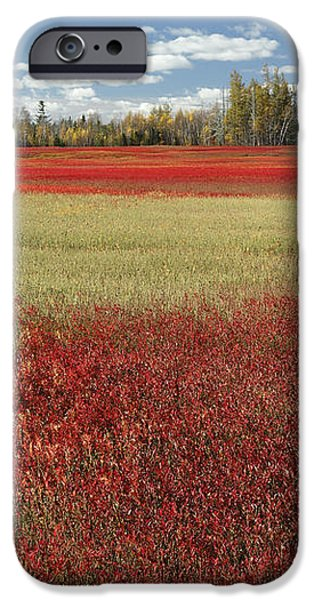 Autumn Blueberry Field Maine iPhone Case by Scott Leslie