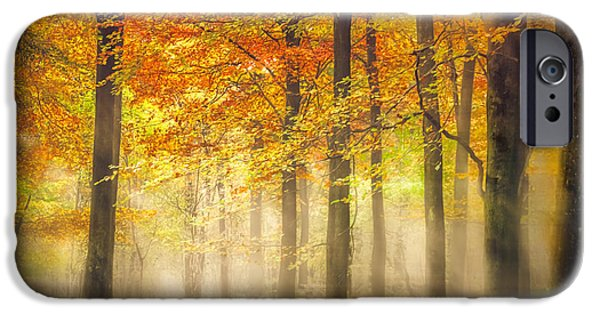 The Fall iPhone Cases - Autumn Gold iPhone Case by Ian Hufton