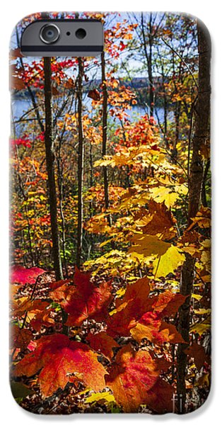 Forest iPhone Cases - Autumn splendor iPhone Case by Elena Elisseeva