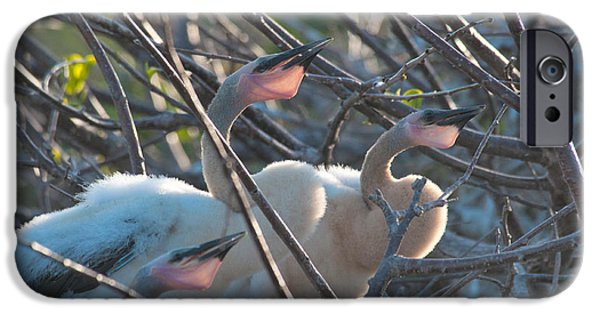 Baby Bird iPhone Cases - Baby Anhinga iPhone Case by Mark Newman