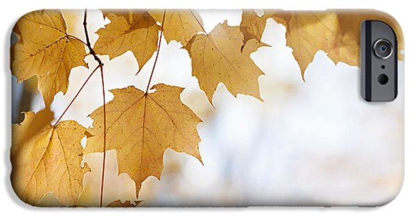 Maple Season iPhone Cases - Backlit maple leaves in fall iPhone Case by Elena Elisseeva
