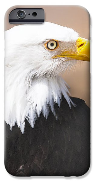 Recently Sold -  - Birds iPhone Cases - Bald Eagle iPhone Case by David Millenheft