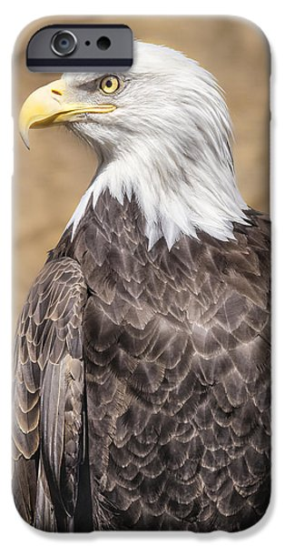 Snake iPhone Cases - Bald Eagle iPhone Case by Peter Lakomy