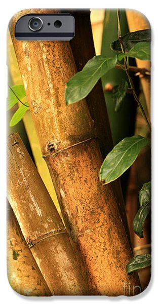 Bamboo Leaves iPhone Cases - Bamboo iPhone Case by Cheryl Young