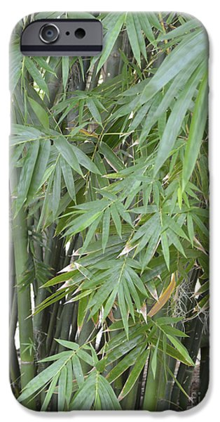 Bamboo Fence iPhone Cases - Bamboo 2 iPhone Case by To-Tam Gerwe