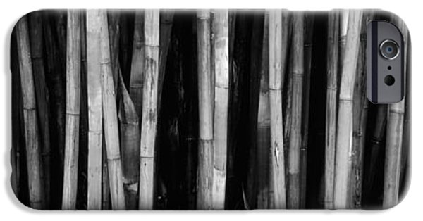 Botanical Photographs iPhone Cases - Bamboo Trees In A Botanical Garden iPhone Case by Panoramic Images