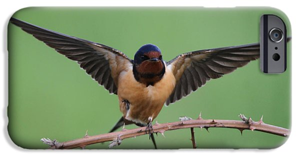 Swallows iPhone Cases - Barn Swallow iPhone Case by Angie Vogel