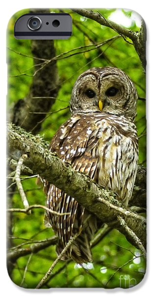 Hooters iPhone Cases - Barred Owl iPhone Case by Thomas R Fletcher