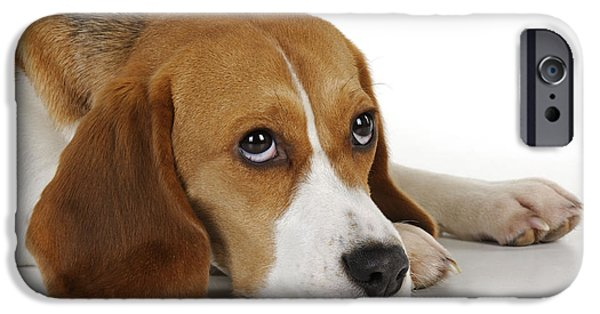 Dog Close-up iPhone Cases - Beagle iPhone Case by John Daniels
