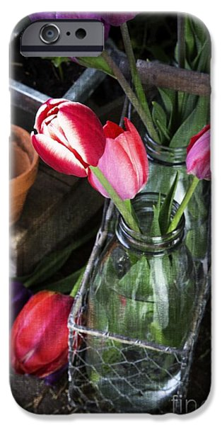 Shed iPhone Cases - Beautiful Spring Tulips iPhone Case by Edward Fielding