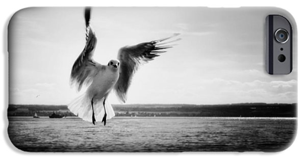 Flying Seagull iPhone Cases - Beauty over Lake Constance iPhone Case by Mountain Dreams