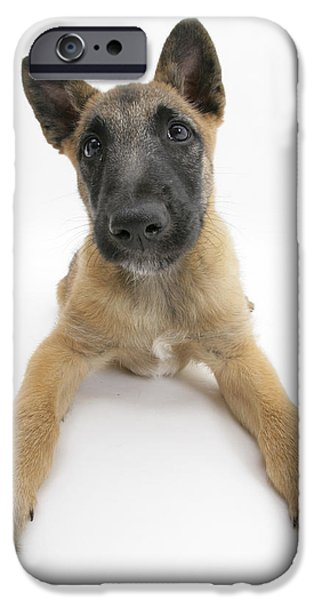 Cute Puppy iPhone Cases - Belgian Shepherd Pup iPhone Case by Mark Taylor