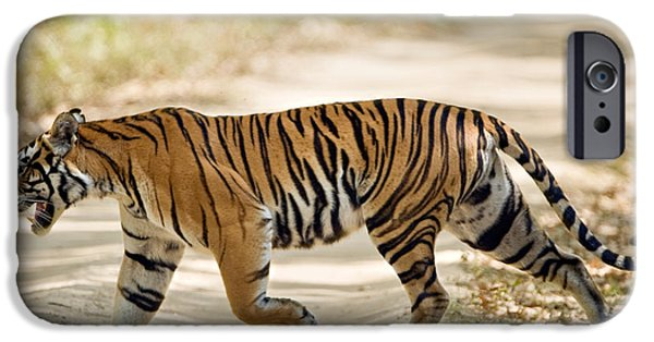 Bengal Tiger iPhone Cases - Bengal Tiger Panthera Tigris Tigris iPhone Case by Panoramic Images