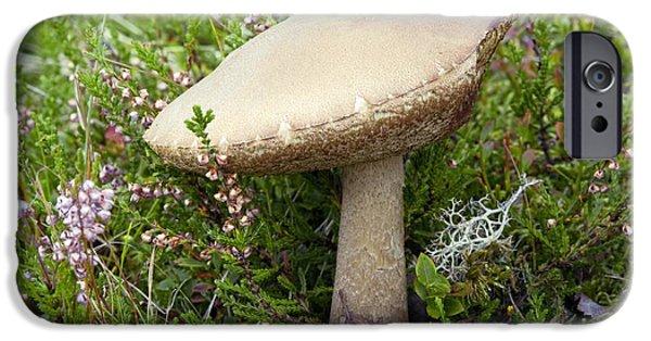 Purple Mushroom iPhone Cases - Birch Bolete Leccinum Scabrum Mushroom iPhone Case by Duncan Shaw