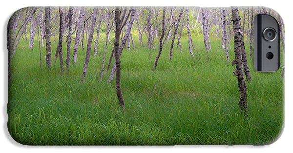 Meadow Photographs iPhone Cases - Birch Trees In The Great Meadow, Acadia iPhone Case by Panoramic Images
