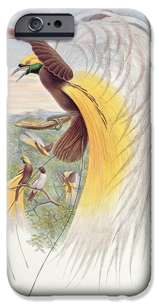 Animal Drawings iPhone Cases - Bird of Paradise iPhone Case by John Gould
