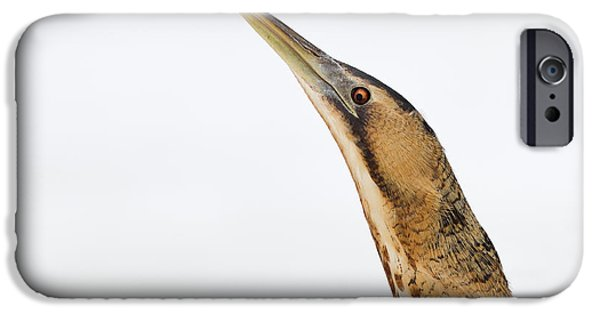 Wintertime iPhone Cases - Bittern Times iPhone Case by Roeselien Raimond