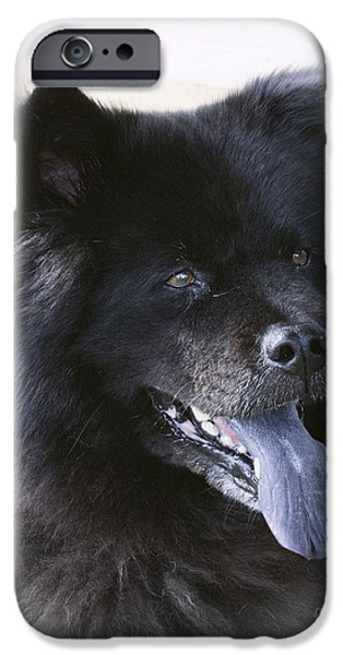 Fury iPhone Cases - Black Beauty iPhone Case by TN Fairey
