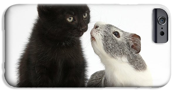 House Pet iPhone Cases - Black Kitten And Guinea Pig iPhone Case by Mark Taylor