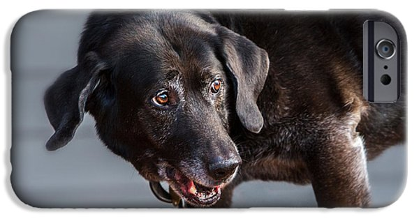 Black Dog iPhone Cases - Black Labrador Senior iPhone Case by Iris Richardson