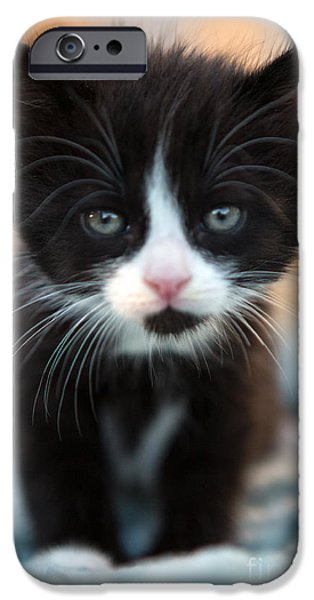 Animal Photographs iPhone Cases - Blake and white Kitten iPhone Case by Iris Richardson
