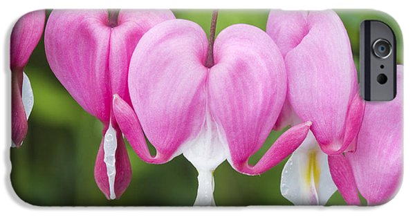 Bleeding Hearts iPhone Cases - Bleeding Heart Flowers iPhone Case by Keith Webber Jr
