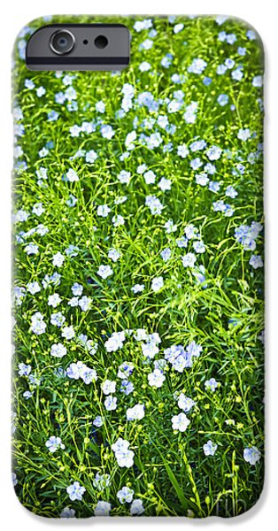 Crops iPhone Cases - Blooming flax  iPhone Case by Elena Elisseeva