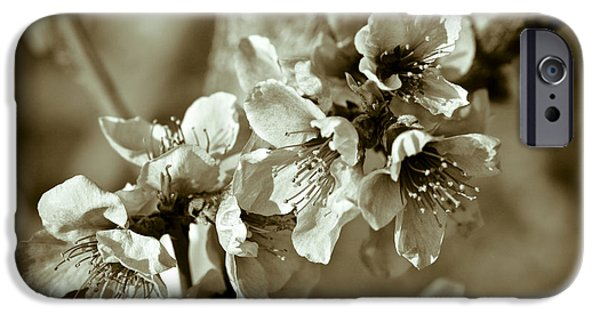 Fruit Tree iPhone Cases - Blossoms iPhone Case by Frank Tschakert