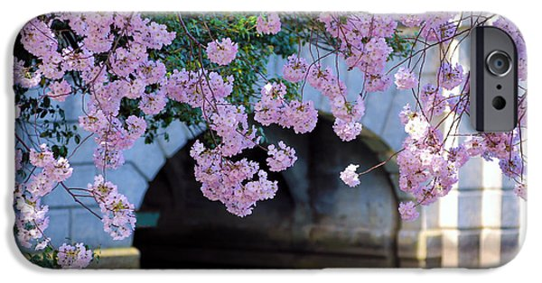 Cherry Blossoms iPhone Cases - Blossoms iPhone Case by Mitch Cat