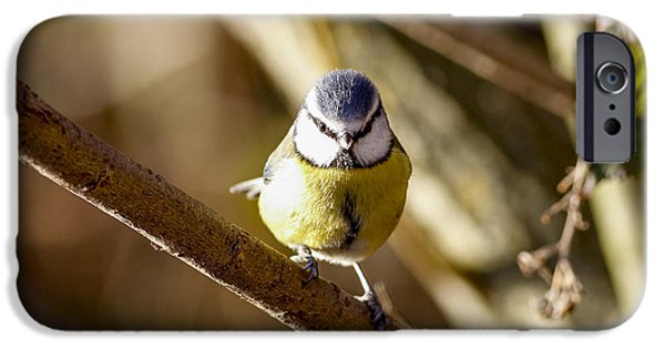 Milton Keynes iPhone Cases - Bluetit iPhone Case by Simon Gregory