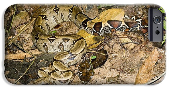 Boa Constrictor iPhone Cases - Boa Constrictor iPhone Case by Gregory G. Dimijian, M.D.