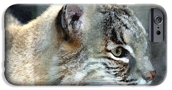 Bobcats Mixed Media iPhone Cases - Bobcat iPhone Case by Barry Spears