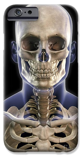 Frontal Bones iPhone Cases - Bones Of The Head And Upper Thorax iPhone Case by Science Picture Co