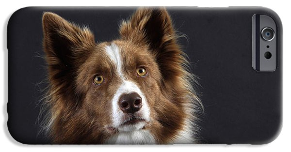 Dog Head iPhone Cases - Border Collie Dog iPhone Case by Christine Steimer