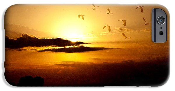 Flying Seagull iPhone Cases - Born Free iPhone Case by Music of the Heart