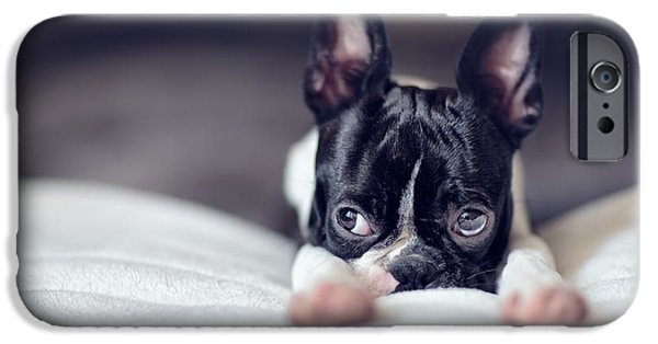 Pup iPhone Cases - Boston Terrier Puppy iPhone Case by Nailia Schwarz
