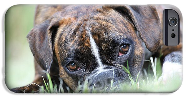 Boxer iPhone Cases - Boxer dog iPhone Case by Jana Behr