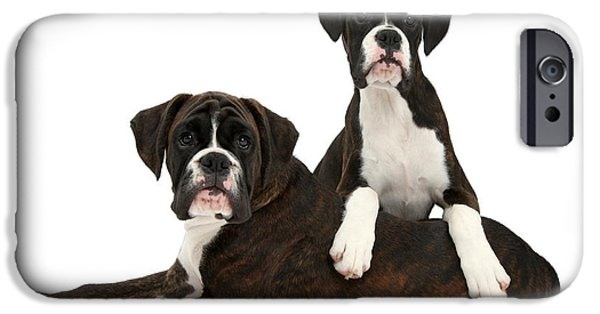 Boxer Puppy iPhone Cases - Boxer Pups iPhone Case by Mark Taylor