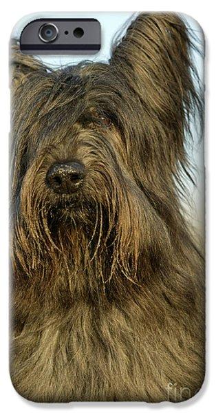Dog Close-up iPhone Cases - Briard Dog iPhone Case by Jean-Michel Labat