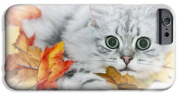 Young Digital Art iPhone Cases - British Longhair Cat iPhone Case by Melanie Viola