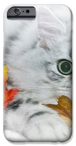 British Longhair Cat iPhone Case by Melanie Viola