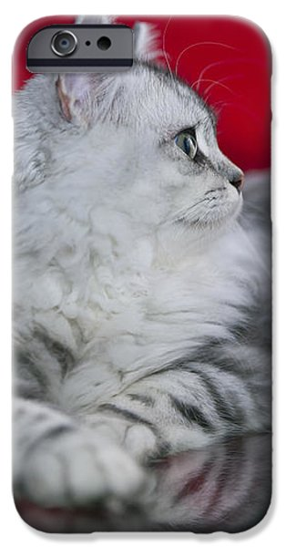 Cat Reflection iPhone Cases - British Longhair Kitten iPhone Case by Melanie Viola
