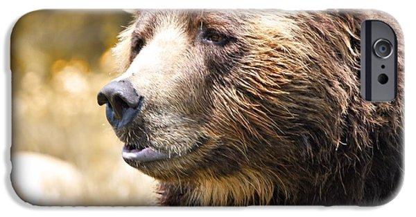 Kodiak iPhone Cases - Brown Bear Portrait In Autumn iPhone Case by Dan Sproul