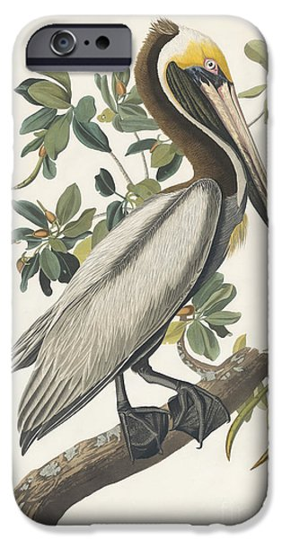 Wild Life Drawings iPhone Cases - Brown Pelican iPhone Case by Celestial Images