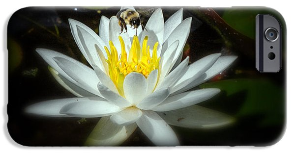 Water Lilly iPhone Cases - Busy Bee iPhone Case by Bill  Wakeley