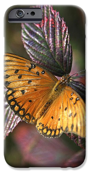 Black Berries iPhone Cases - Butterfly On Briar iPhone Case by Darrell Storts