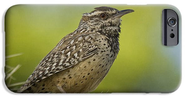Wren iPhone Cases - Cactus Wren  iPhone Case by Saija  Lehtonen