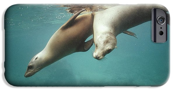 California Sea Lions iPhone Cases - California Sea Lions Playing Sea iPhone Case by Tui De Roy