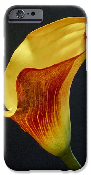 Calla Lilly iPhone Cases - Calla Lilly iPhone Case by David and Carol Kelly